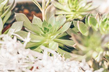 Zimmerpflanze klein