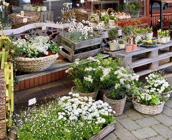 Image - Ensemble an Outdoor-Pflanzen