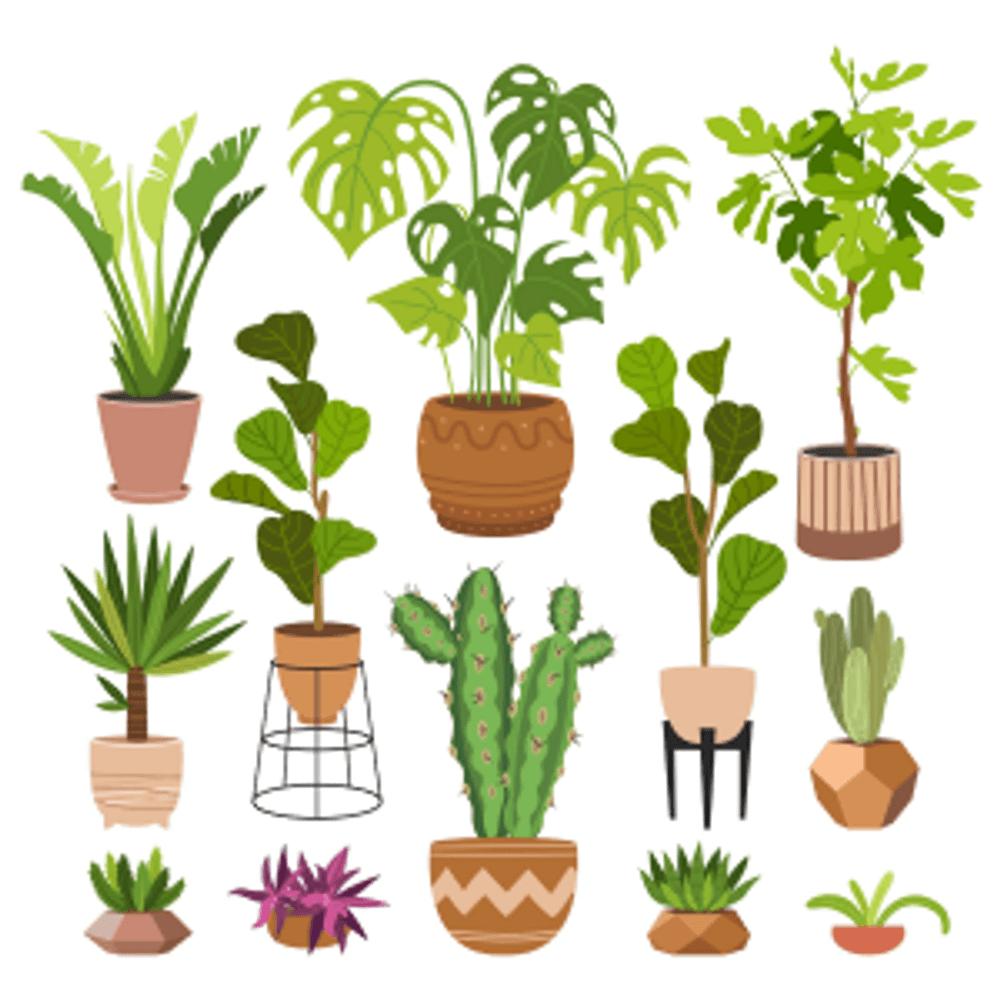 Zimmerpflanze - zoom